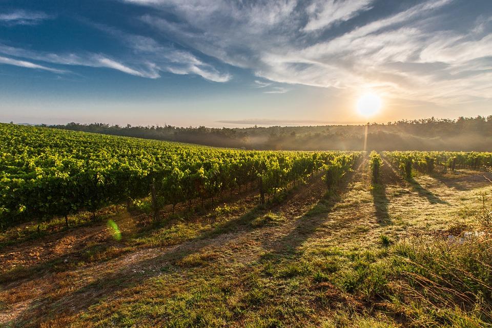 Venez découvrir les métiers viticoles à la médiathèque de Fourchambault