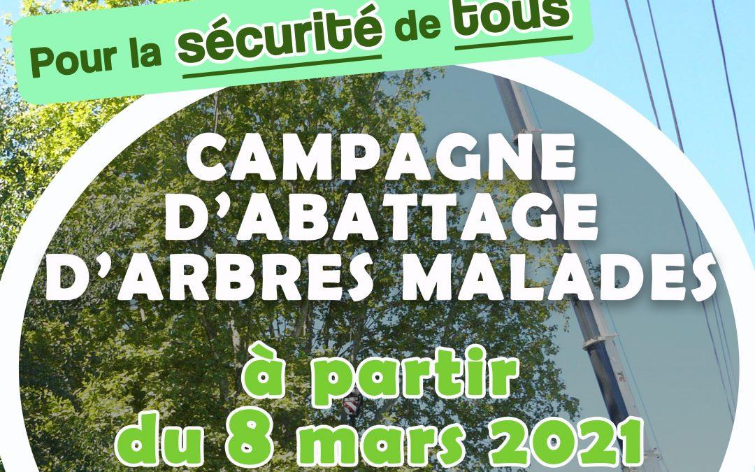 Pour la sécurité de tous: abattage des arbres malades sur le quai de Loire