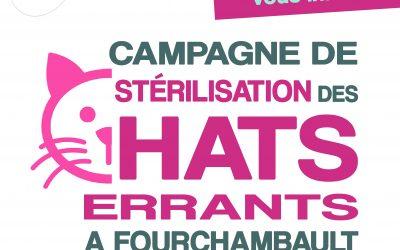 La campagne de stérilisation des chats errants se prolonge Boulevard Boigues !